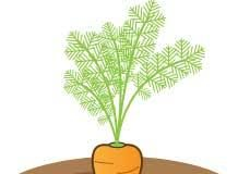 cartoon image of a carrot growing in brown soil