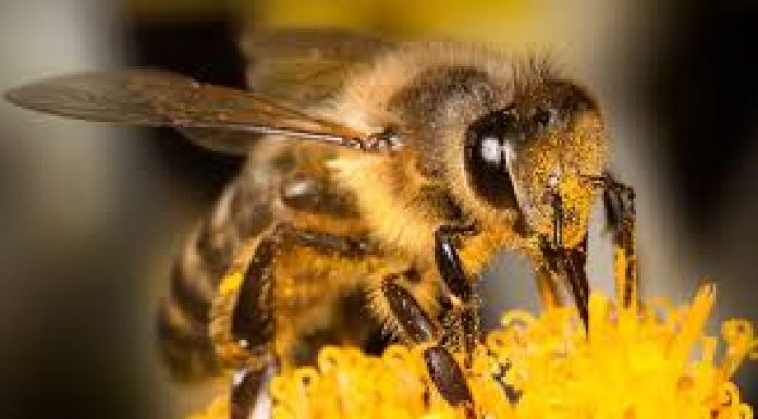 close up image of a bee