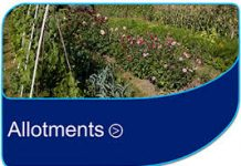 Allotments Photo