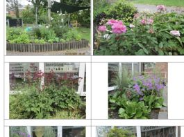 Standish Library photos of garden